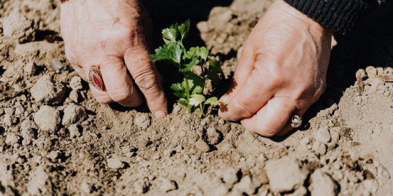 Energie besparen in de tuin